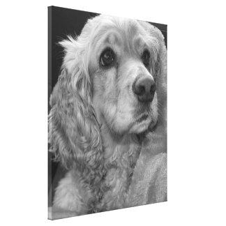 Cocker spaniel in black in white canvas print