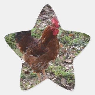 Cockerel Star Sticker