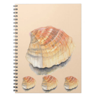 Cockle seashell, orange and yellow from the Beach Notebooks