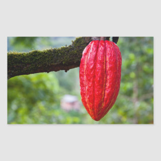 cocoa pod red rectangular sticker