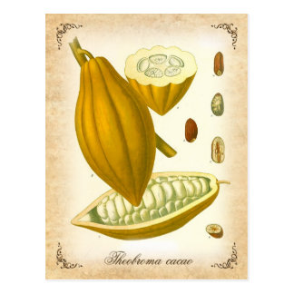 Cocoa - vintage illustration postcard