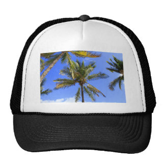 Cocoanut Palm Trees Sky Background Mesh Hat