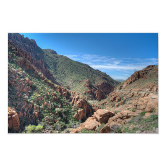 Coconino National Forest Photo Print