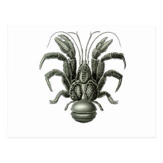 Coconut Crab Postcard