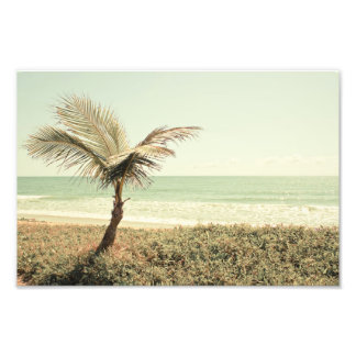 Coconut Palm and Pastel Beach Photography Photo