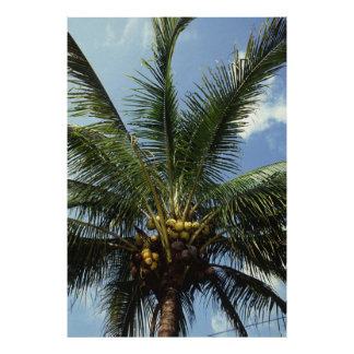 Coconut Palm Tree Poster