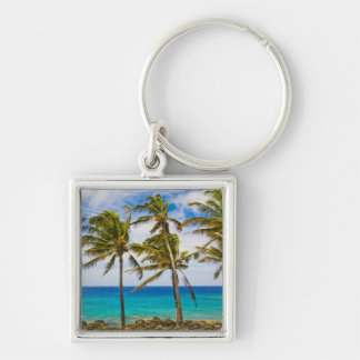 Coconut palm trees (Cocos nucifera) swaying in Key Chains