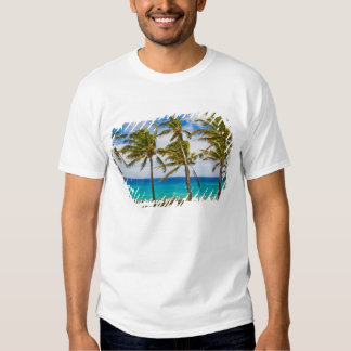 Coconut palm trees (Cocos nucifera) swaying in Tees