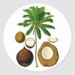 Coconut Tree Botanical Illustration Round Sticker