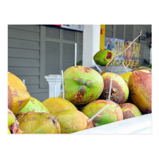Coconut Water Key West FL Coconuts Postcard