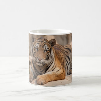 Coffee mug - Thailand Tiger - Tiger Temple