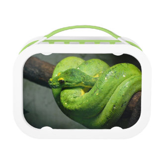 Coiled Green Tree Snake Lunch Box