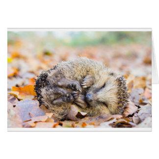 Coiled hedgehog lying on leaves in fall season card