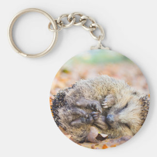 Coiled hedgehog lying on leaves in fall season key ring
