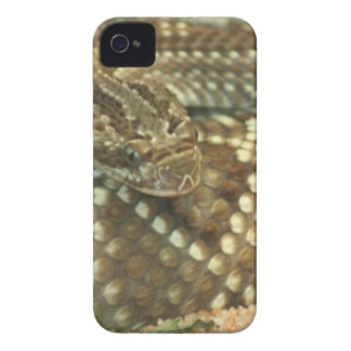 Coiled Rattlesnake iPhone 4 Case