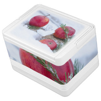 Cold box cooler