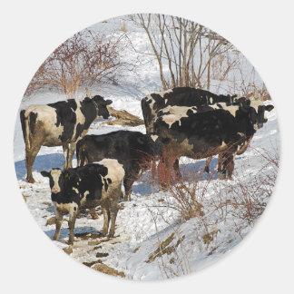 Cold Cows Sticker
