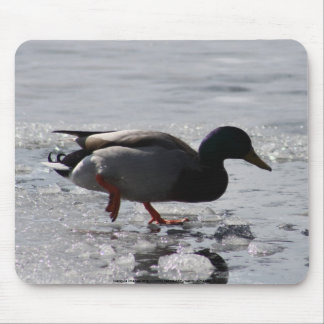 Cold Duck Mouse Pads