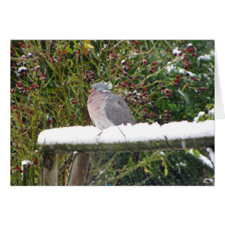 Cold pigeon card