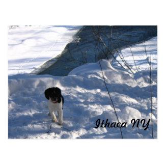 Cold Puppy Postcard