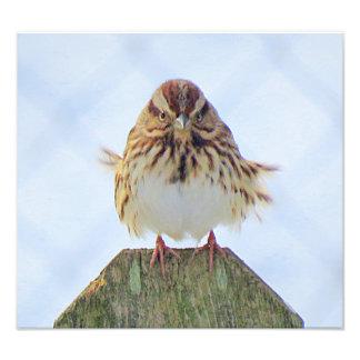 Cold Song Sparrow Photo Print