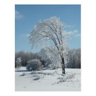 Cold winter Tree Postcard