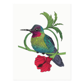 Colibri Bird Illustration Postcard