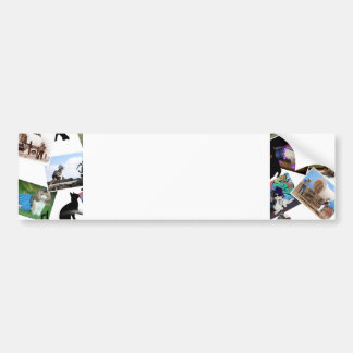 Collage of  Cat Photographs Bumper Sticker