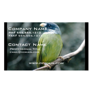 Collared Finch Bellied Bulbul Business Cards