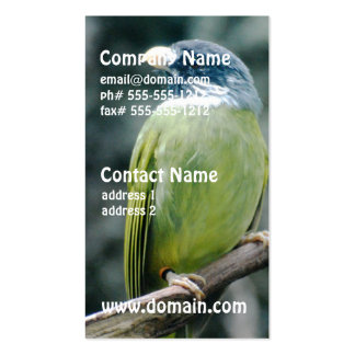 Collared Finch Bellied Bulbul Business Card Templates