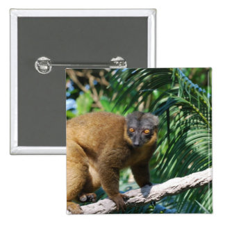 Collared Lemur Pin