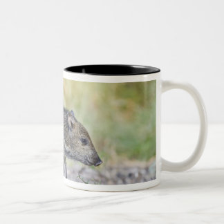 Collared peccary juvenile Two-Tone coffee mug
