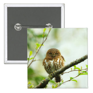 Collared pigmy owlet perching on tree branch, 15 cm square badge