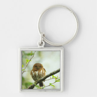 Collared pigmy owlet perching on tree branch, key ring