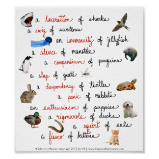 Collective Nouns: posters Poster