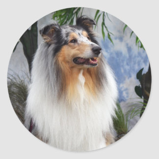 Collie dog blue merle stickers, gift idea classic round sticker