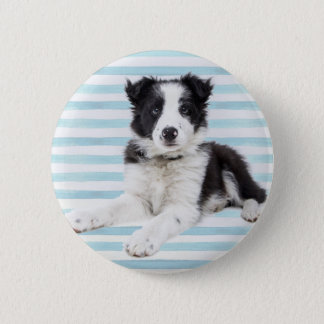 Collie Dog Pup 6 Cm Round Badge