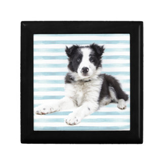 Collie Dog Pup Gift Box
