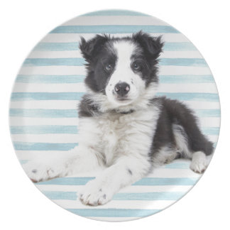 Collie Dog Pup Plate