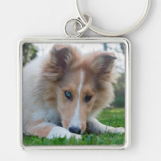 Collie puppy dog cute rough collie face photo key chains