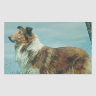 Collie Rectangular Sticker