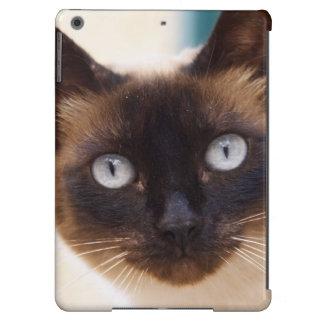 Collioure. Roussillon. A street cat. France. iPad Air Cases