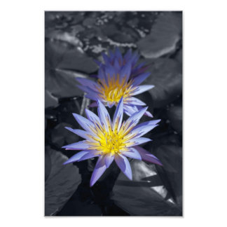 Color key Water Lilies Photo Print