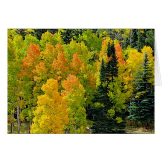 Colorado Aspen Grove Card