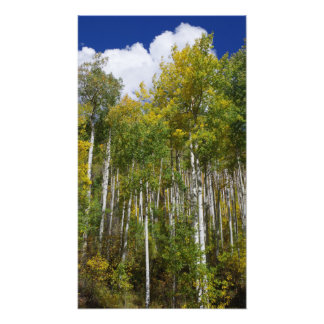 Colorado Autumn Aspens.JPG Photo
