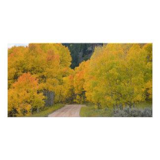 Colorado Birch Trail Photo Art