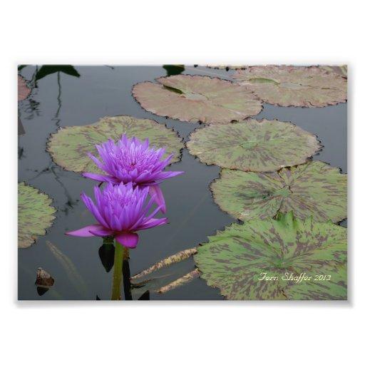 Colorado Denver Botanic Garden Lily Pad Photograph