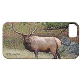 Colorado Elk iPhone 5 Custom Case-Mate ID iPhone 5 Case