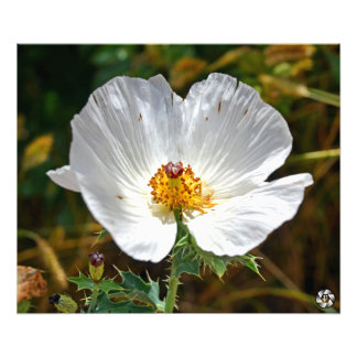 Colorado Flower Photo Print