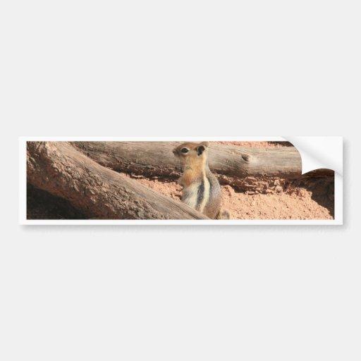 Colorado Ground Squirrel Bumper Sticker